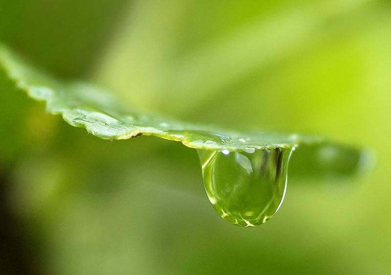 A Simple Drop of Rain