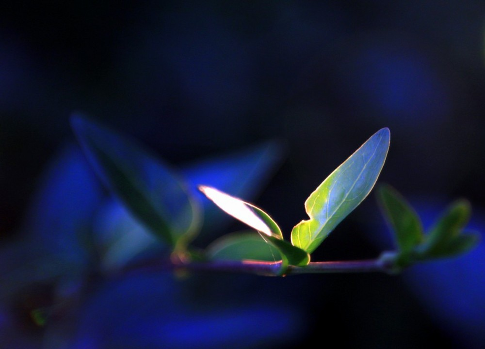 A small light in a flower