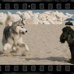 A Spanish Husky dancing on the set ...