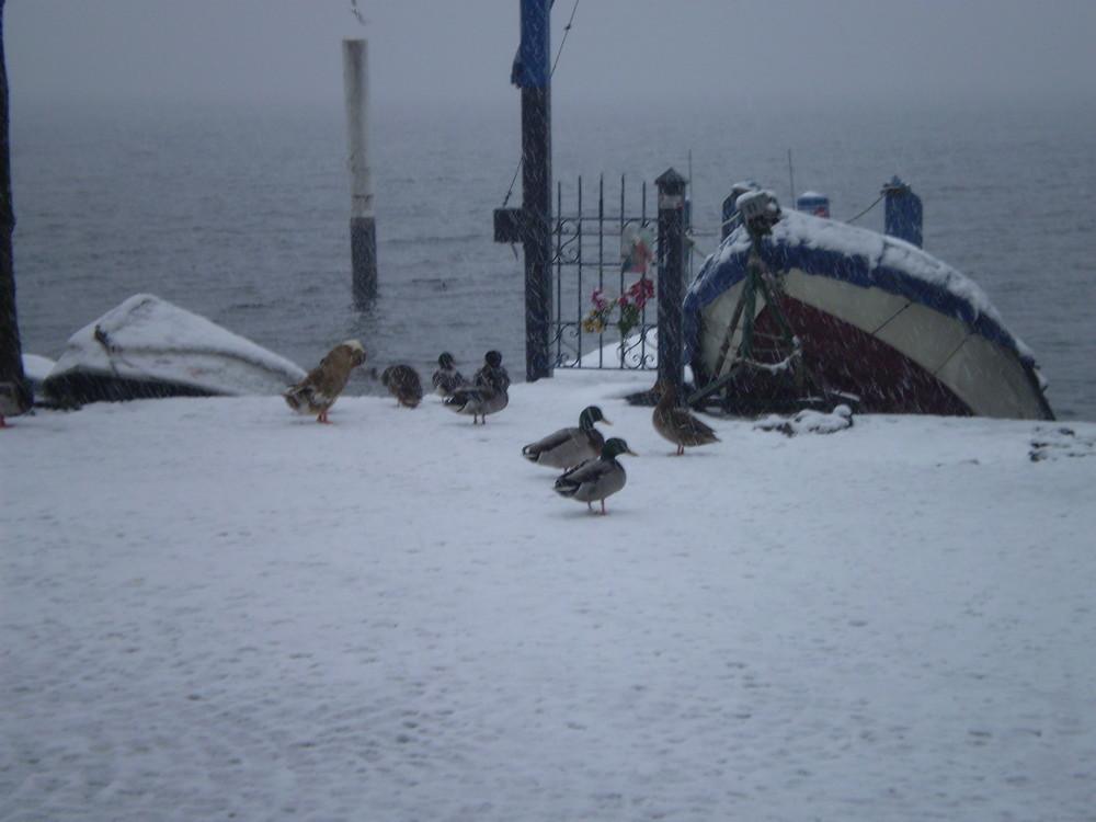 A spasso sotto la neve