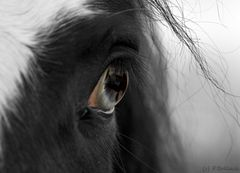 a special eye