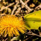 A splendid butterfly in tune with flower