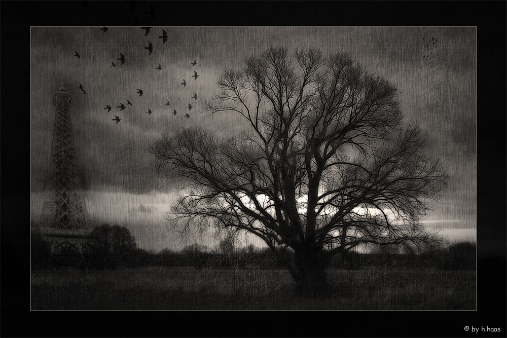 A Story of an Old Tree