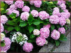 A stranger in flowerbed....