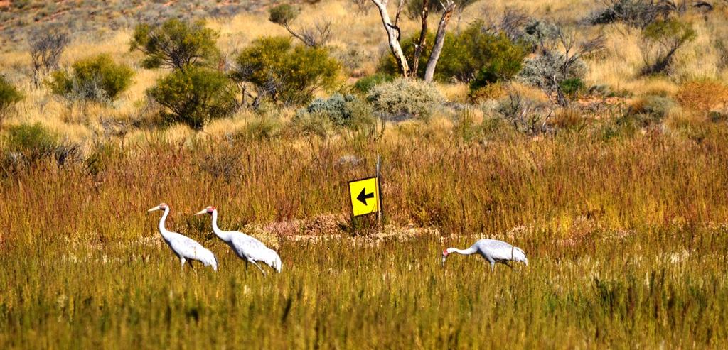A stroll in the Simpson Desert
