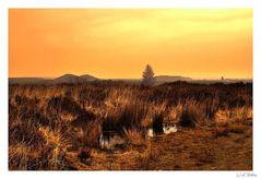 """"""" a sunset at the Mechelen heather """""""