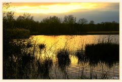 """ a sunset on the ""wijvenheide """