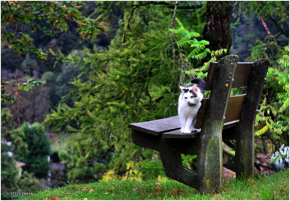 A Sweet Little Village-Kitty High Above the Rhein