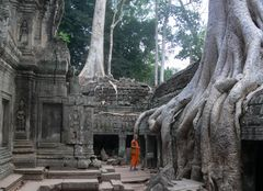 à Ta Prohm (Angkor)