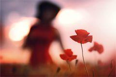* a tale of poppy *
