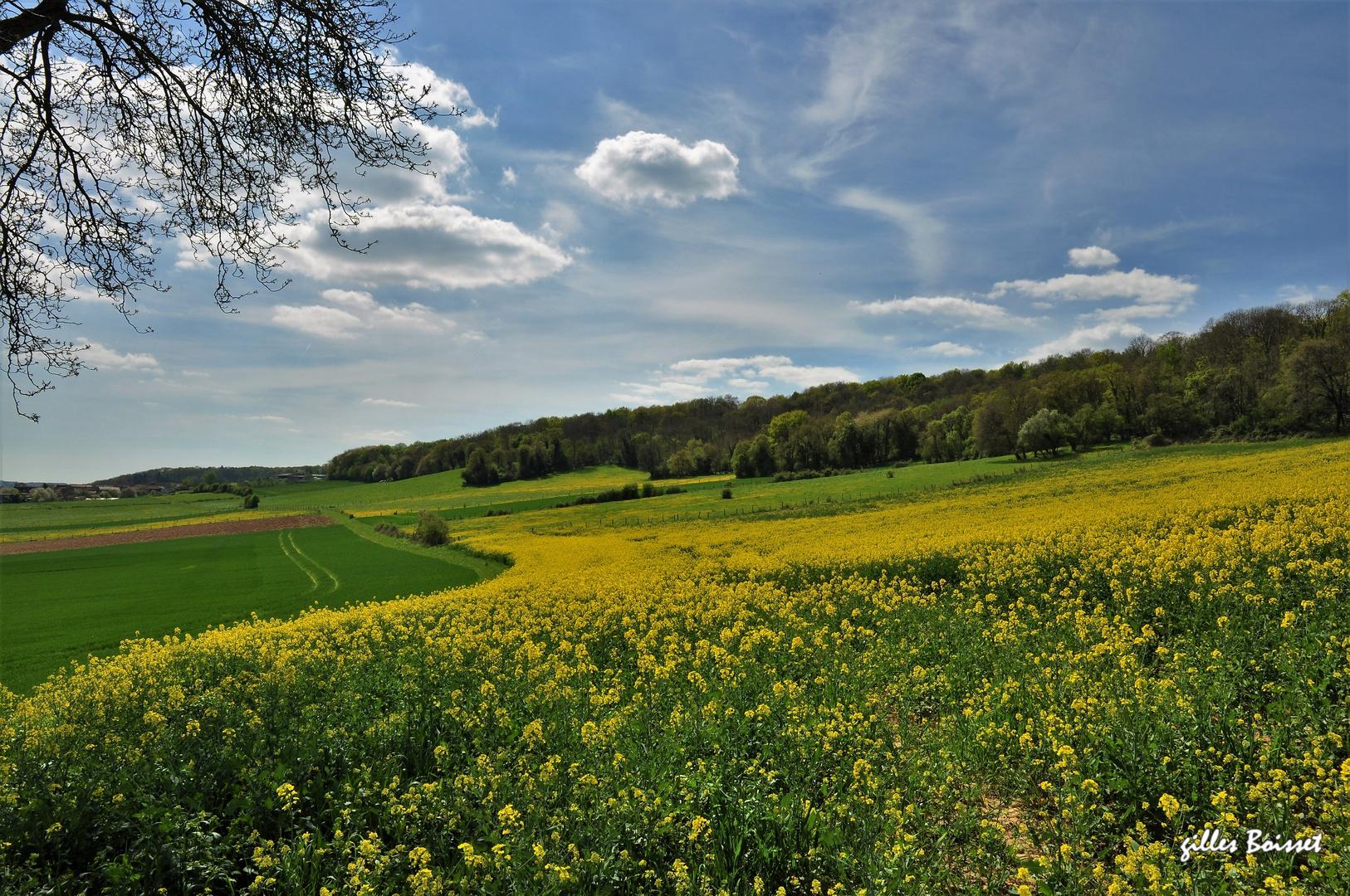 à travers champs dans le vexin normand