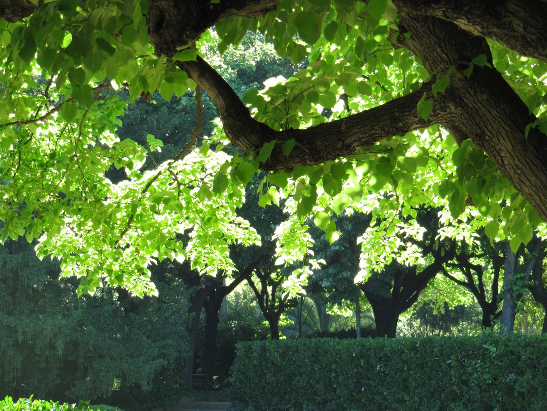 A través de las hojas
