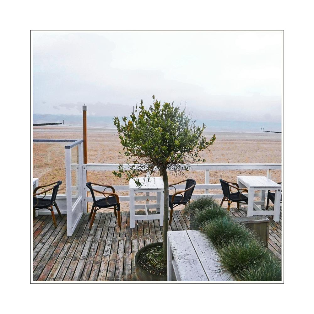 a tree grows in Groede