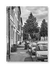 a tree grows in Hammerstein, (Goethestraße)