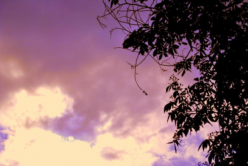 A tree in a purple sky
