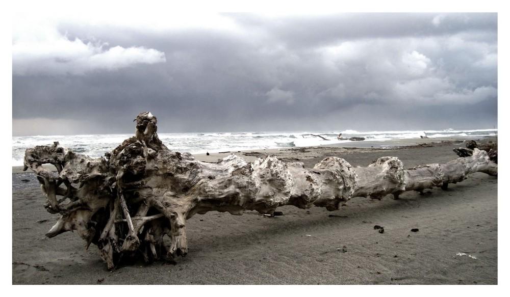 A tree on the beach