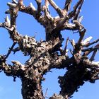 A un árbol seco