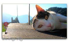 A Village Kitty