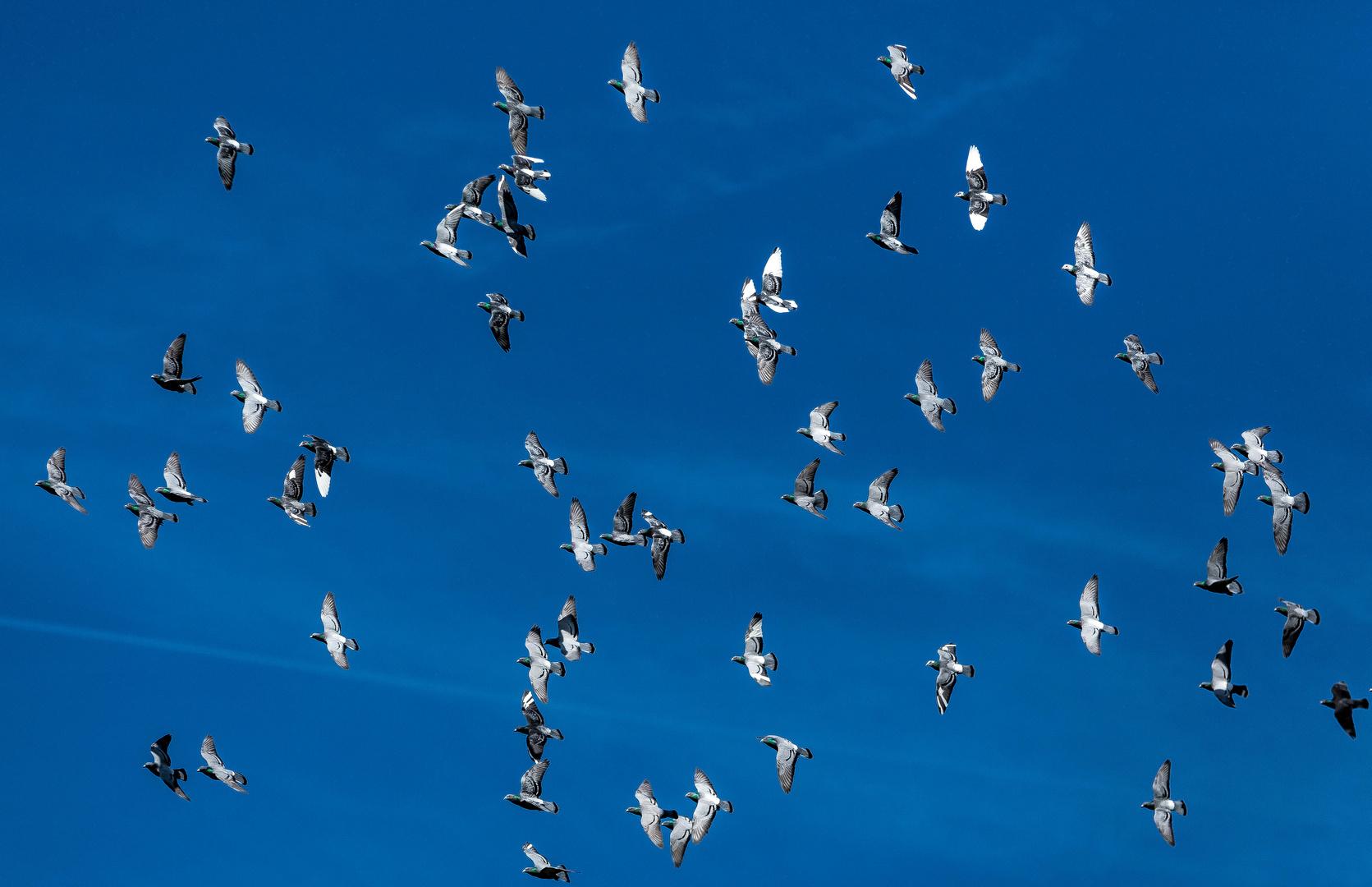 Les oiseaux - René François Sully Prudhomme A-vol-doiseau-4ce4816c-8654-4679-8bfa-de220410264d