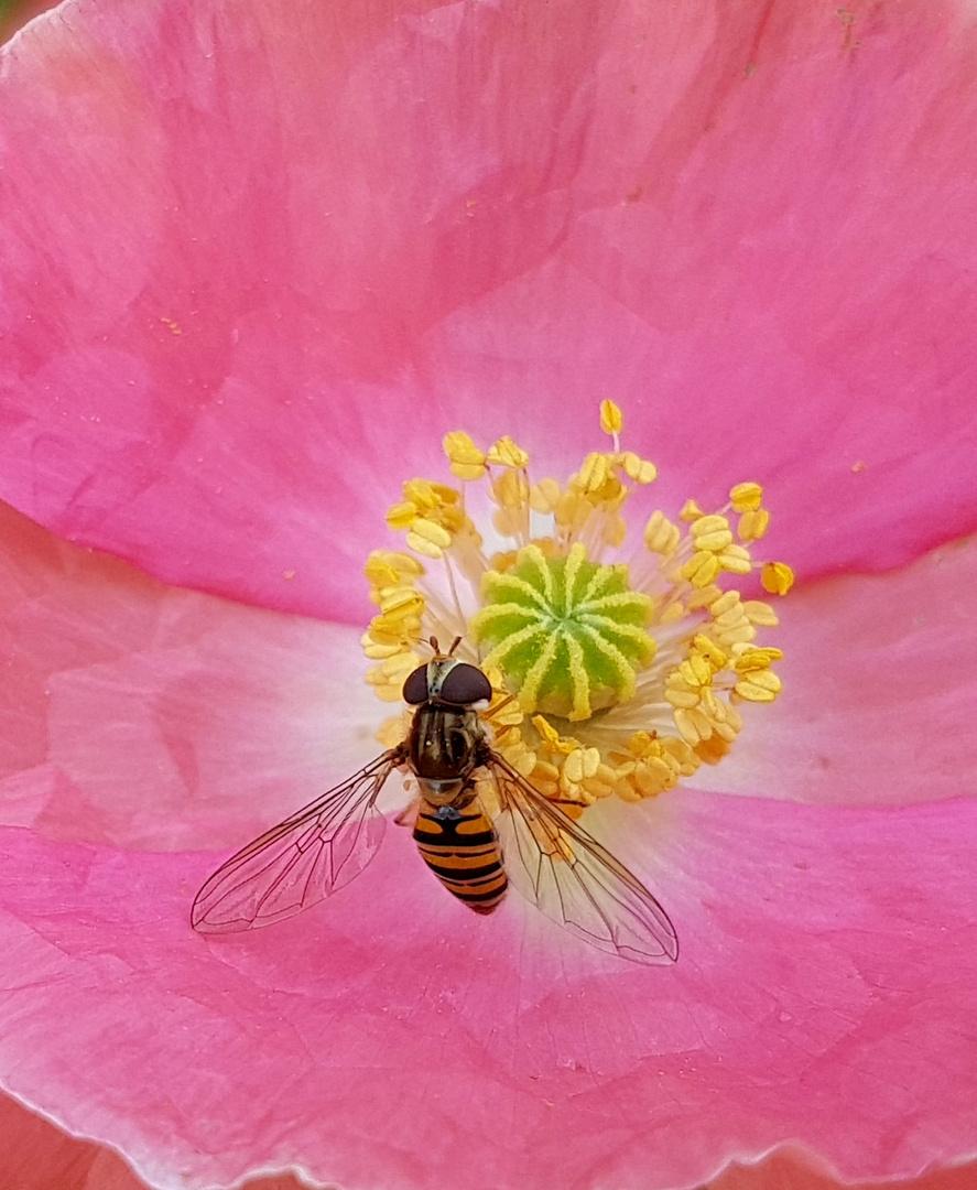 ~a wasps breakfast~