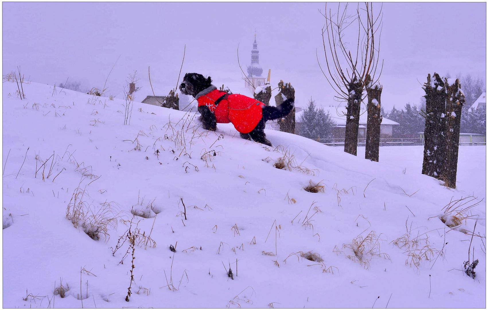 A Wicky-Emily le encanta la mucha nieve (Wicky-Emily ist vom vielen Schnee begeistert)