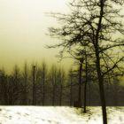 A Winter Dream