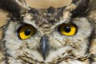 A Wise Owl,.....