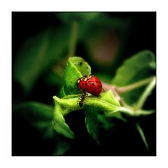 a.ant