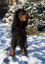 Aaron im Schnee