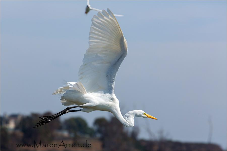 Ab heute gibt´s vorerst nur Vogelbilder  ;-)