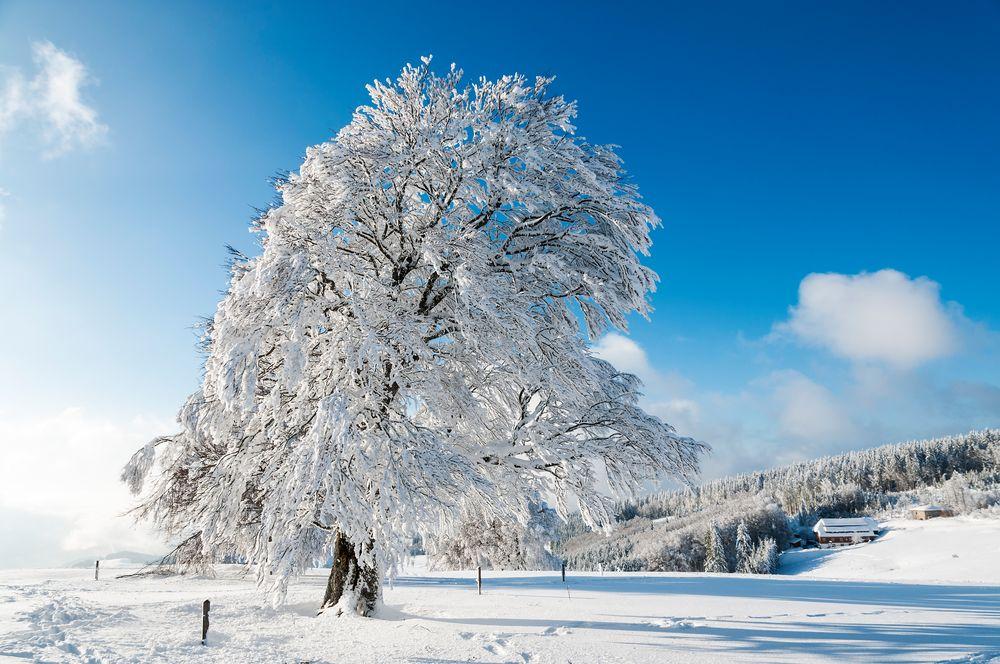 ab in den Schnee