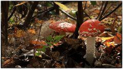 Ab in die Pilze