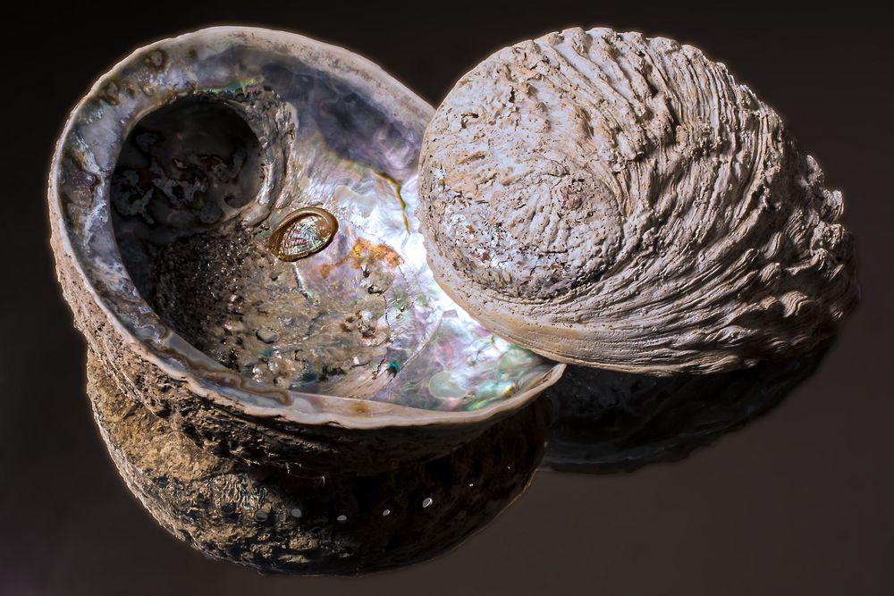 Abalone_Seeohren