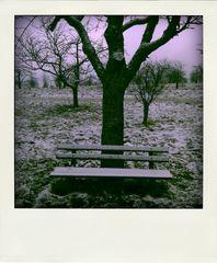 abandoned landscape