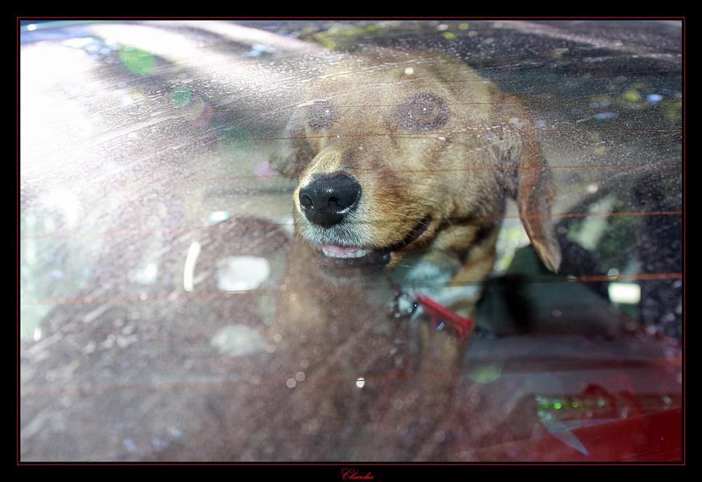 Abbandonato in auto