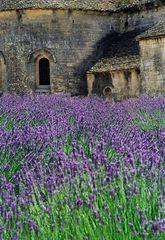 Abbey Lavender