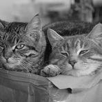 ...abbiamo tanto  sonno ......e questo rompe!!!!