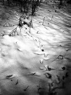 ABC- da lief was durch den Schnee