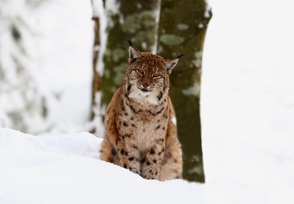 A,B,C, die Katze lief im Schnee....