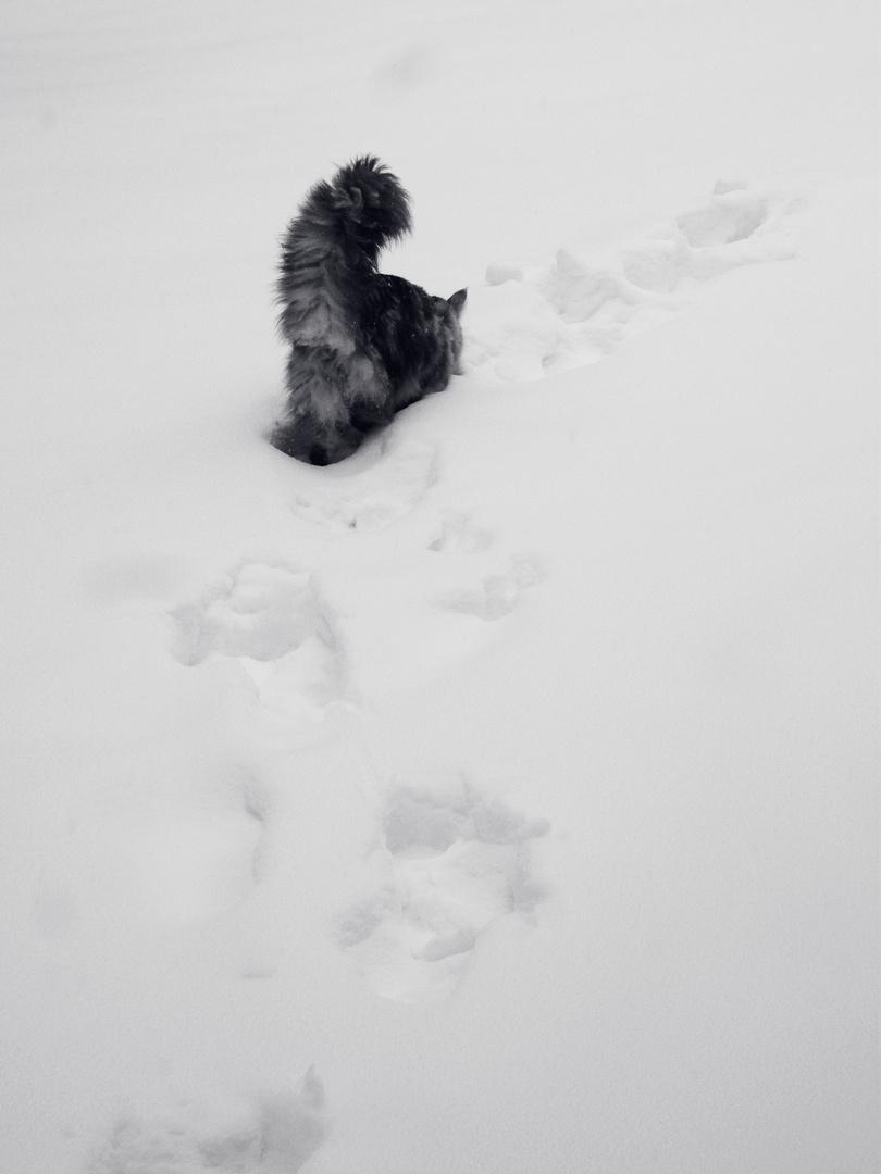 ABC- Die Katze lief im Schnee.
