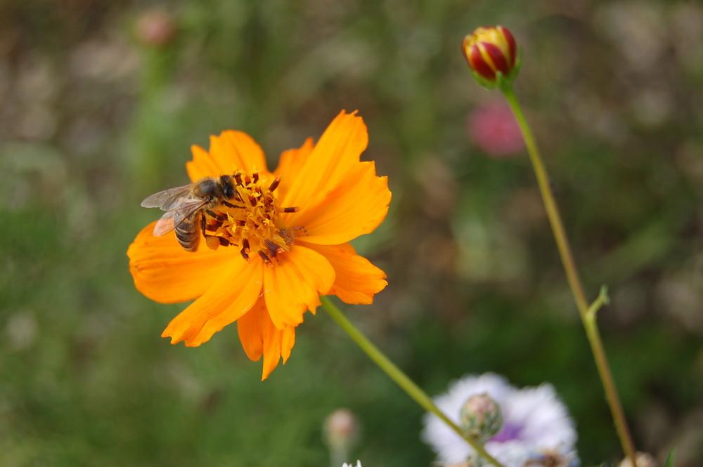 abeille (la pause)