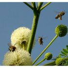 Abejas viajando de flor en flor