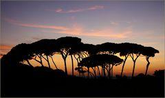 Abend am Golfo di Baratti