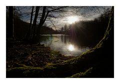 Abend am Waldweiher 1