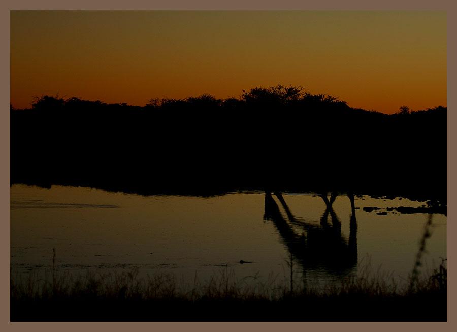 Abend am Wasserloch