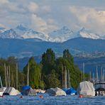 Abend am Zürichsee - Blick auf die Alpen