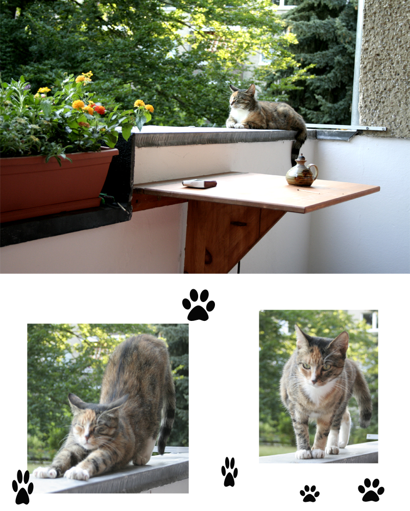 Abend Auf Dem Balkon Foto Bild Tiere Haustiere Katzen Bilder