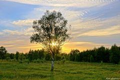 Abend im Duvenstedter Moor
