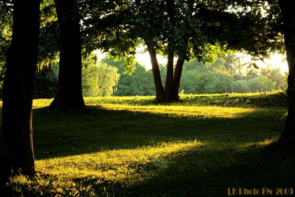 Abend im Park