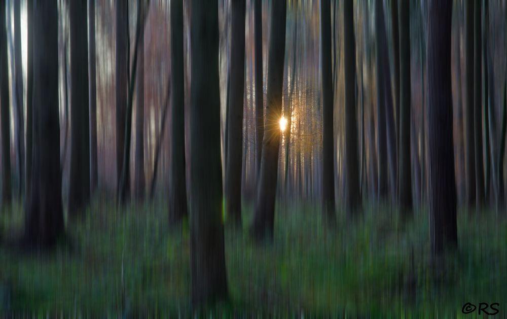 Abend im Wald